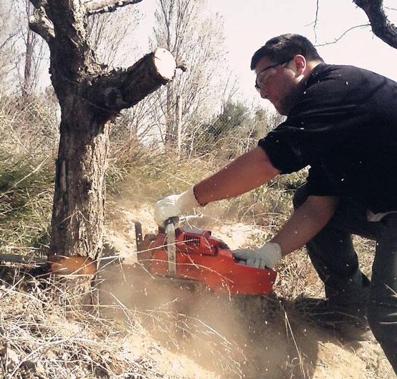 servicios forestales en zaragoza