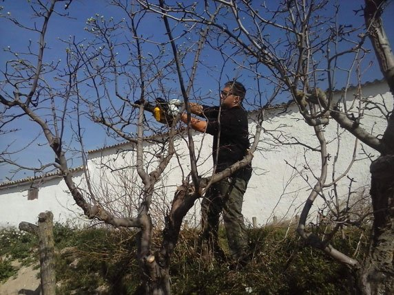 Podas de árboles frutales en Zaragoza